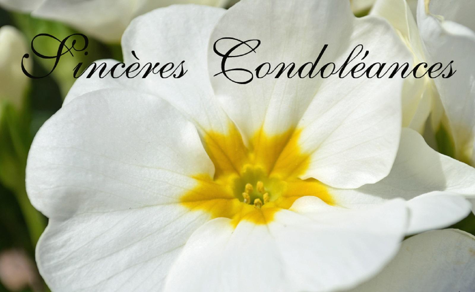 Collectivité De Saint Martin Antilles Française